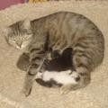 Kimba wurde uns heute - 16.06.2011 - von einem sehr tierlieben Katzenfreund gebracht. In dessen Autowerkstatt hat Kimba in einem Auto ihre Babys zur Welt gebracht. Da man aber weiter arbeiten muss und man aber jetzt schon ein paar Tage Rücksicht auf die